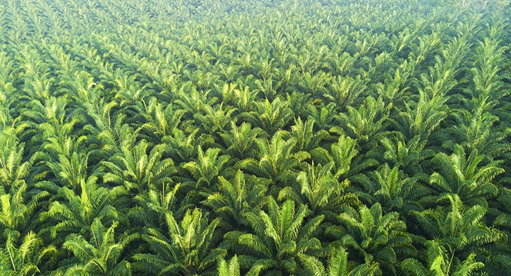 Partners Team Up to Track and Verify Sustainable Palm Oil