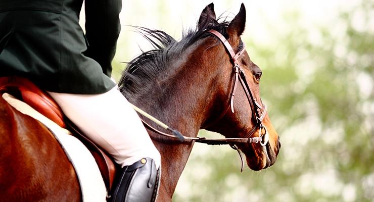 Longvida Curcumin May Help Reduce Pain and Lameness in Horses with Osteoarthritis