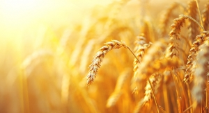 Partnership to Yield High-Fiber Wheat