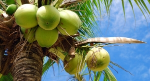 Coalition Advocates for Declassification of Coconut as a 'Tree Nut' Allergen