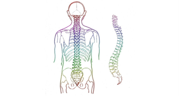 American Association of Neurological Surgeons, AAOS Create Spine Registry