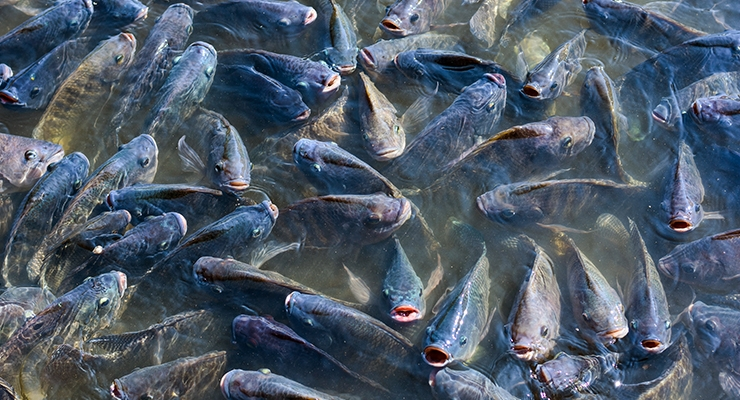 House Wellness Foods' Lactobacillus Shown to Improve Health of Farmed Fish Stock