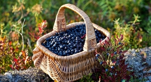 INS Farms to Distribute Range of Berry Ingredients in North America