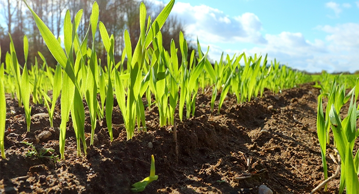 Organic Crop Practices Have Lasting Effects for Soil Health
