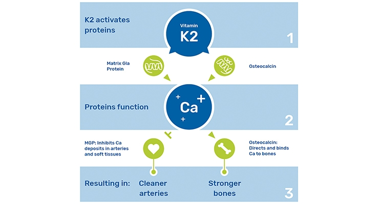Vitamin K2: A Clinically Proven Cardio-Protective Powerhouse