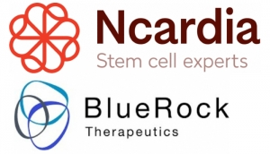 Ncardia and BlueRock Form Collaboration
