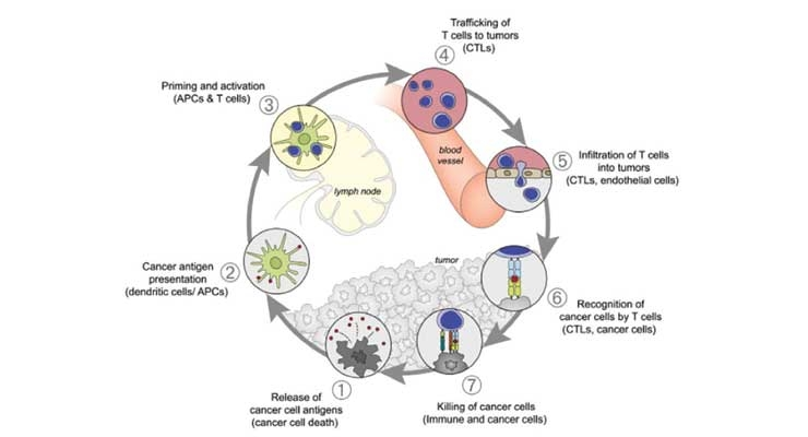 Realizing the Full Potential of Precision Medicine in Oncology