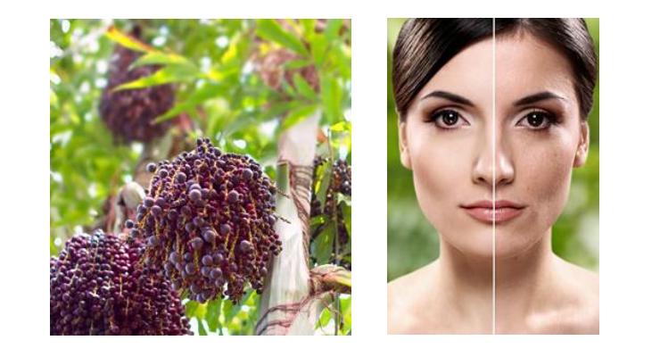 Beraca Introduces New Ingredients