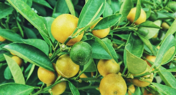 Flavonoid Extract Gains Steam with Science & Patent Success