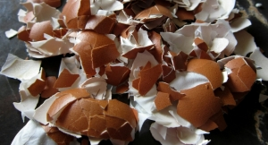 Walking on Eggshells: Trial Shows Arthritis Improvements in Eggshell Membrane Supplementation