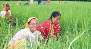 Organic India: Spiritual Seekers Getting Down to Earth
