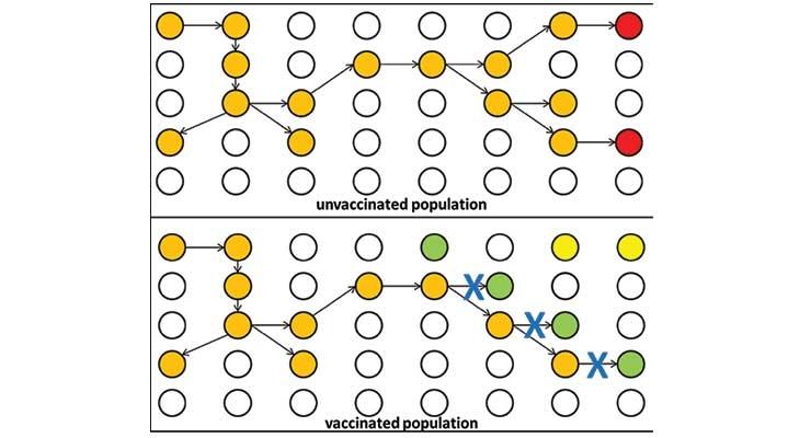 Coronavirus SARS-CoV-2: Architecture of a Pandemic