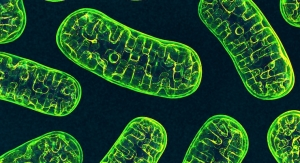 Discovery of New Mitochondrial Protein May Be Clue for Disease Treatment