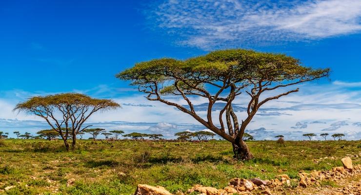 Nexira Launches Carbon-Neutral Acacia Ingredient