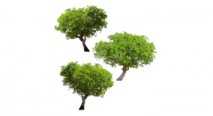 Young Living Donates To Arbor Day Foundation and TreeUtah