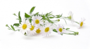 American Herbal Pharmacopoeia Collaborating with Tehran University on Chamomile Literature