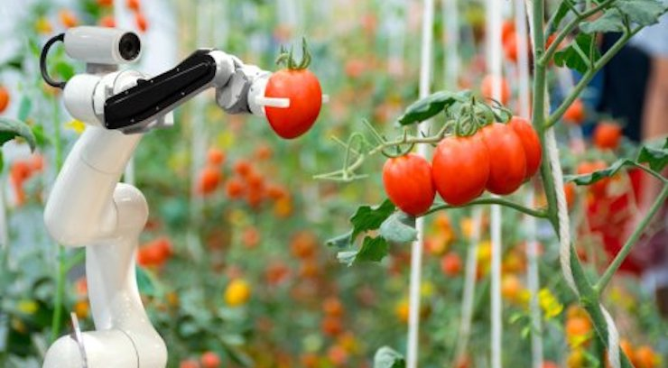 International Research Group Lays Out Plan for Sustainable Food System