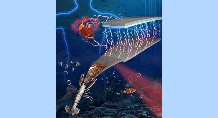 Powering Medical Sensors From Sea Creature Shells