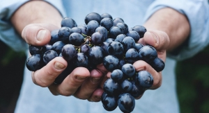 Long-Term Resveratrol Study Shown to Improve Bone Mineral Density in Women
