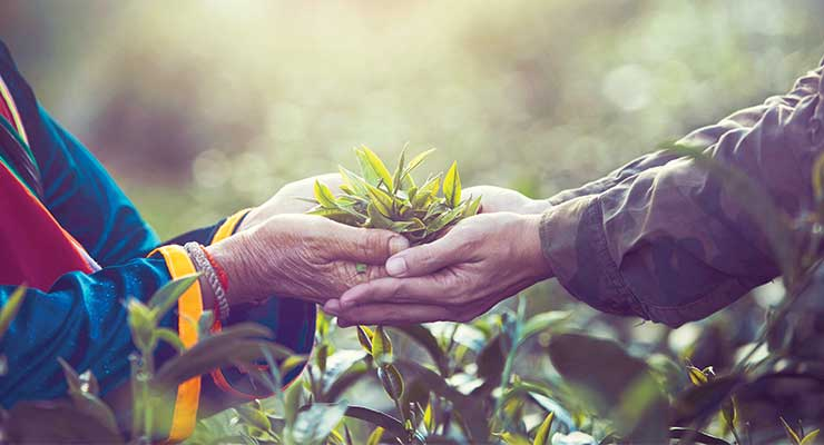 Nurturing the Herb-and-Herbalist Connection