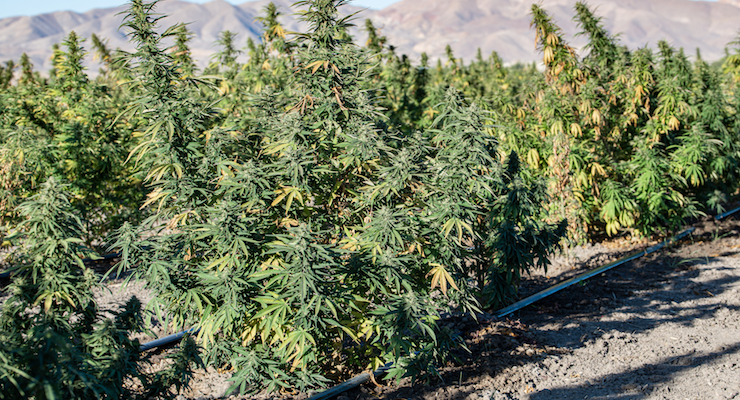 Despite Optimism from Other Trade Groups, NPA Rejects New CBD Proposals