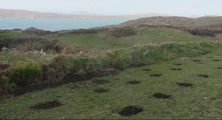 Mary Kay to Plant 5,000 Trees in Ireland