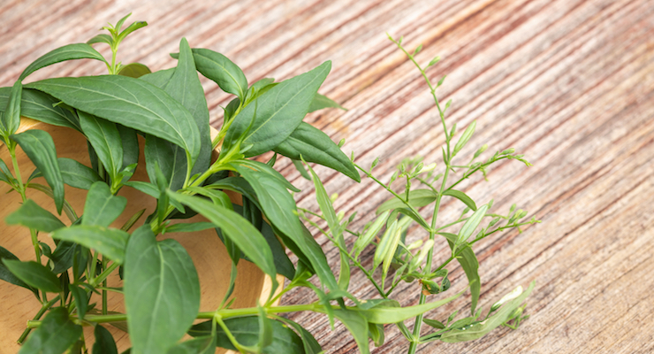 Natural Remedies Adopts Andrographis through ABC's Adopt-an-Herb Program