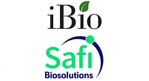 iBio Enters into Agreement with Safi Biosolutions