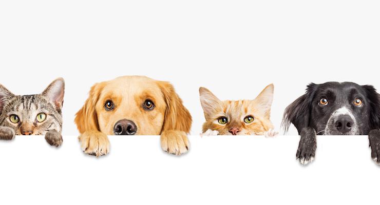 CV Sciences Debuts Line of CBD Pet Products