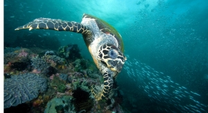 Mary Kay Helps Sea Turtles, Sustainable Eco-Tourism