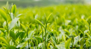 Layn Acquires Green Tea Extract Company Wagott
