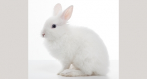 PETA, Dove, The Body Shop, & More Partner to Protect Animals in the EU from Testing