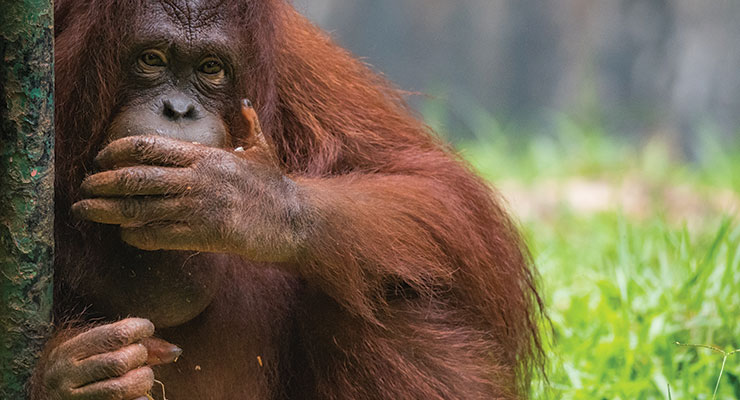 A Palm Oil Replacement In Personal Care Products