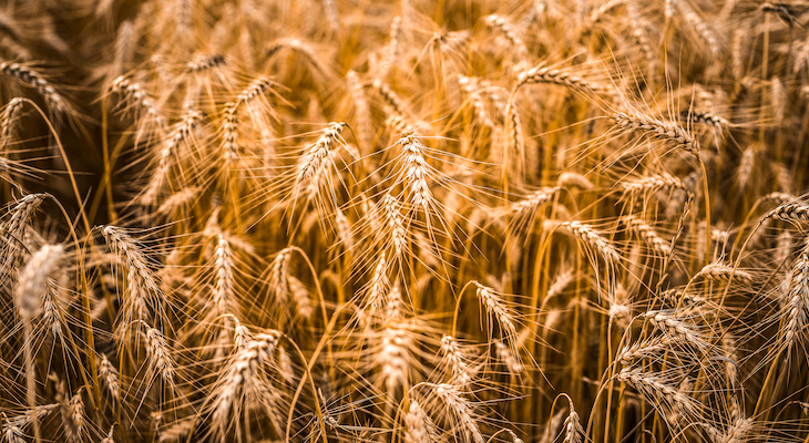 EverGrain Introduces Sustainable Barley Ingredients