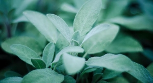 New Study on Sage Extract Formula Suggests Memory Enhancement