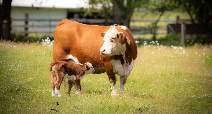 Scientific Paper Highlights Health Benefits of Bovine Colostrum
