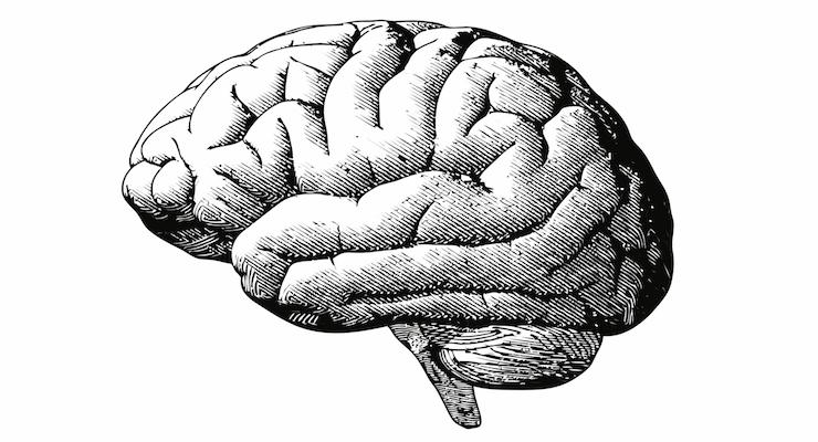 Maypro Launches Brain Health Ingredient NeuroHD