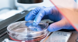 Gattefossé and BioMeca Develop a Model of 3D Dermal Microtissue