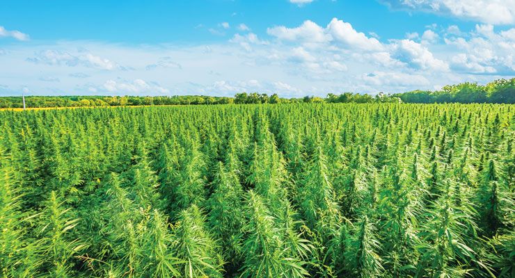 The Ramifications of USDA's Final Rule on Hemp