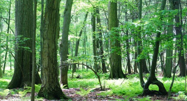 WestRock Donates to Mohawk Hudson Land Conservancy
