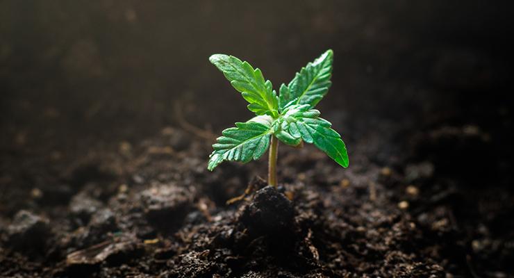Euromonitor Explores Cannabis User Profiles