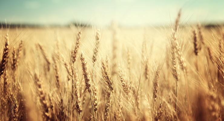 EverGrain, Bright Future Foods Collaborate on Sustainable Supply Chain Project