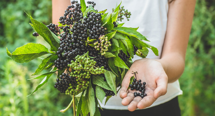 INS Farms Debuts Green Elderberry Whole Fruit Organic Elderberry Powder