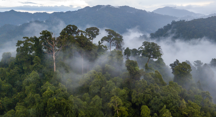 Dow Collaborates with Natura on Strategic Sustainability Project in Brazil