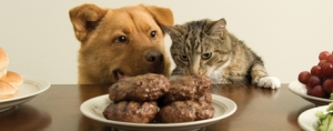 State of the Pet Supplement Industry