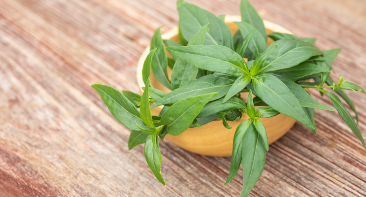 Andrographis Extract Shown to Offer Immune Support