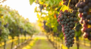 Indena, Alvinesa Launch Organic Grapeseed Extract