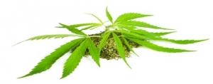 Cannabis and Cancer Treatment