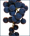 Antioxidants: Finding the Right Balance