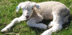 Is R&D the Next Sacrificial Lamb?
